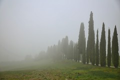 Morning Fog (Julia Mrozek) Tags: morning fog tuscany morgen toskana zypressen