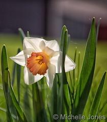 April 13, 2016 - Gorgeous spring flowers. (Michelle Jones)