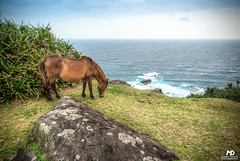 Yongauni Horse (Marek Dekys) Tags: travel light sun color art colors japan landscape photography design photo high nikon day view dynamic outdoor arts picture sigma sharp okinawa d200 exploration range hdr kyushu dx yonaguni 2016 816 jaejama