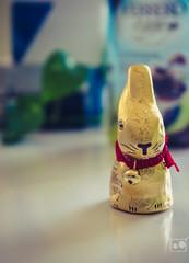 87/366 - Depth of field (burberi (detta Buf)) Tags: canada bunny project easter gold dof chocolate daily depthoffield 365 mercier cioccolato 366 beuf burberi captureyour365