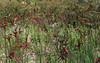 Indian Pacific Sydney Perth 2015-252 (10greenbottles) Tags: travel australia perth kingspark indianpacific gsr kangaroopaws