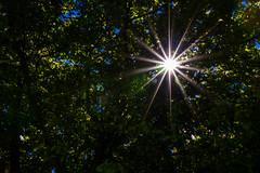 Etoile Solaire (sgiworld) Tags: sun tree canon eos star soleil arbre etoile feuille feuillage 760d canoneos760d
