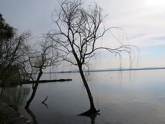 la pace delle acque (givanna) Tags: lago pace acqua umbria celeste silenzio lagotrasimeno tranquillit isolamaggiore