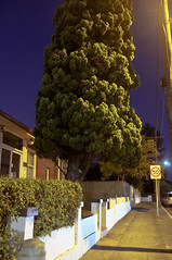 Residential Conifer (jeremy-o) Tags: night streetlight suburban sydney streetphotography adobe nsw croydon splittone cameraraw x100