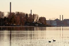 canadians in fastholma (Cano Vääri) Tags: sunset water birds helsinki vanhankaupunginlahti canadagoose brantacanadensis herttoniemi 2016 itähelsinki fastholma