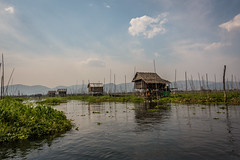 The floating gardens of the Inle Lake (Stockografie) Tags: travel vacation garden sony floating myanmar inlelake rx100iii