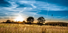 sunset (cb.photography) Tags: blue trees sunset shadow summer sky panorama orange sun tree field clouds germany airplane landscape cornfield sonnenuntergang hessen sommer feld trails himmel panoramic land flugzeug landschaft sonne schatten hdr korn kornfeld westerwald panoramicview driedorf ldk gusternhain mittelhessen lahndillkreis lahndill