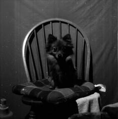 Pet Portraits (BigClownshoes) Tags: blackandwhite dog cat mediumformat flash 11 squareformat pushprocess kodaktmax mamiyac33 kodakd76