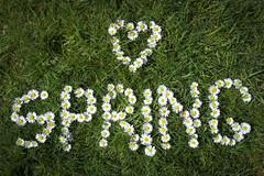 Spring daisies (Keartona) Tags: flowers green love field sunshine daisies word spring heart meadow wildflowers