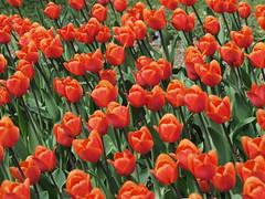 mozirski-gaj_25 (carlo) Tags: flowers olympus slovenia slovenija fiore botanicalgarden omd em1 ortobotanico giardinobotanico mozirje mozirskigaj