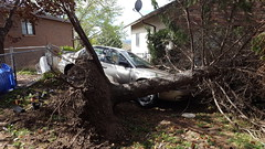 Tree fell on cars (denebola2025) Tags: charity storm utah view wind north relief help disaster mormon lds ogden pleasant