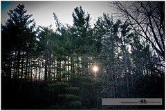 APRIL 2016  NM1_8629_011433 (Nick and Karen Munroe) Tags: trees sunset sun ontario canada tree golden nikon dusk munroe hike goldenhour brampton heartlake ontariocanada goldensky nickandkaren karenandnick heartlakeconservation heartlakeconservationarea munroephotography nikon2470f28 munroedesignsphotography munroedesigns karenick karenick23 nickmunroe nikond750 nickandkarenmunroe karenandnickmunroe karenmunroe
