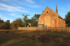 Alfresco Dining at Hill End (Darren Schiller) Tags: building heritage abandoned church fauna architecture afternoon australia kangaroo newsouthwales deserted smalltown goldrush hillend