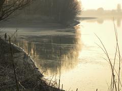 Il Po in inverno (Olly1951) Tags: river po inverno autunno pescatore gualtieri bruma fiumepo lanca