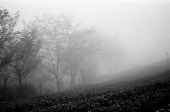 000227800029' (supersoniatsai) Tags: taiwan  s11 filmphotography kodaktrix400 bessar3m
