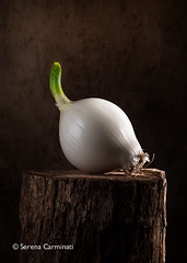 Young onion on wood (foodfulife) Tags: stilllife food white texture vertical closeup studio lowlight shiny colours flash creative young foodphotography fruitandvegetables woodenbackground foodportraiture texturestudies