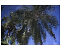 Mirage (www.jucahelu.com) Tags: blue fiction costa beach colors palms photography landscapes colorful natural rica oasis vida mirage pura espejismos jucahelu