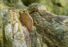 St.Fintans Tree. (Tony Brierton) Tags: coins wishes roadside prayers alms moneytree 5416 clonenagh stfintanstree