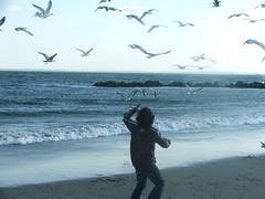 Free Play (nataliyabellony) Tags: ocean boy seagulls beach water birds brooklyn island flying outdoor atlantic coney