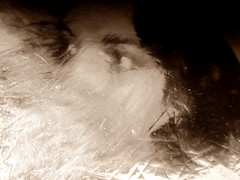 2016-04-26 soluble portrait (7) (april-mo) Tags: portrait reflection art monochrome experimental foil creative surreal blurred distortions flouartistique womanportrait experimentalart experimentaltechnique solubleportrait