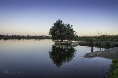 Arbol Agua ma500px_7954 (Oscar Toms) Tags: sunset naturaleza tree nature water de relax arbol atardecer mirror la los oscar agua caja espejo tomas recuerdos
