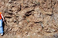 Pillow basalt exposed along the Parkfield-Coalinga Road, Monterey County, California (cocoi_m) Tags: california outcrop nature rock montereycounty geology jurassic greenstone roadcut cretaceous shear parkfield pillowbasalt parkfieldcoalingaroad franciscancomplex subhorizontal