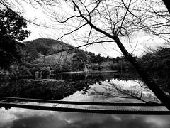 Shashin - DSCN2966 (Mathieu Perron) Tags: life city bridge people bw white black monochrome japan nikon kyoto noir perron daily nb journey   mp blanc japon personne ville gens vie mathieu   sjour    quotidienne  ryanji     p520  zheld