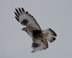(theresa.brown1976) Tags: sky bird nature beautiful beauty birds animal animals canon wonderful outside outdoors living fly nationalpark wings pretty hawk earth feathers feather stunning yellowstonenationalpark yellowstone alive hawks planetearth livingthings featheredfriends beautifulearth