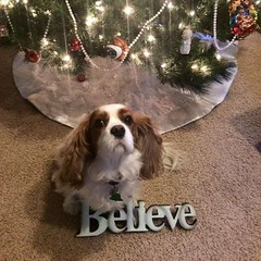 """Libby Scott says Merry Christmas • <a style=""""font-size:0.8em;"""" href=""""http://www.flickr.com/photos/72564046@N04/24217911583/"""" target=""""_blank"""">View on Flickr</a>"""