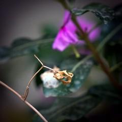 Death in Focus (FarhanZia) Tags: blur flower color leave