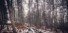 Remnants of Winter (Augmented Reality Images (Getty Contributor)) Tags: trees winter snow cold forest canon landscape scotland track perthshire wideangle bracken