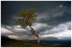 Norway Landscape Tree (bo foto) Tags: tree nature norway clouds landscape photography nikon boudewijn olthof