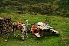 feuillage hoort er bij (merciekes) Tags: jeroen wandelen cis bergen dieren eten pyreneen struinnatuur