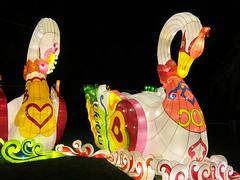 UK - London - Chiswick - Magical Lantern Festival - Swans (JulesFoto) Tags: uk england london swans chiswick chineselanterns chiswickpark chiswickhousegardens magicallanternfestival