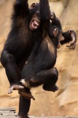 _DSC9502 (alfaluis) Tags: animal zoo pato jardim macaco tigre urso zoologico