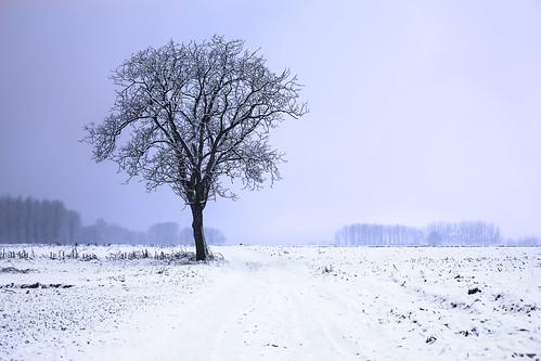 Solitary snow tree