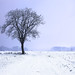 Solitary snow tree
