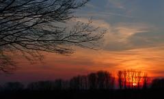 Good Night Dellwig (TablinumCarlson) Tags: leica sunset 6 sun tree backlight clouds germany deutschland europa europe sonnenuntergang north wolken nrw sonne ruhr baum unna dlux frndenberg gegenlicht nordrhein rhinewestphalia silhouetten froendenberg dellwig frondenberg westphaln