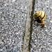 030 snail amsterdam 3