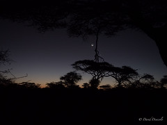 Dawn in Africa (davdenic  in the sky ) Tags: africa nature tanzania wildlife safari ngorongoro serengeti savanna savana