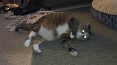 #Cats #feline #pets #flickrcats (Rated R Superstar!) Tags: cats pets feline flickrcats