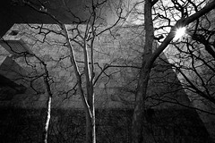 """At the Getty"" (helmet13) Tags: california trees bw usa wall architecture backlight losangeles raw branches gettycenter muss aoi 100faves peaceaward heartaward world100f d800e"