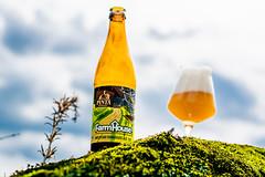 DSC_6555 (vermut22) Tags: beer bottle beers brewery birra piwo biere beerme beertime browar butelka