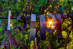 Typo Tree Sunburst (splinx1) Tags: sunset tree typography leaf branch tripod letters kitlens surreal type typo hdr contrejour typographic photomatixpro pentaxart