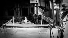 I'm the captain now! (Sebastian Bayer) Tags: ocean italien sea vacation blackandwhite bw italy bird nature water animal outside boat fishing meer wasser ship outdoor widescreen seagull gull liguria urlaub olympus captain sw ropes highlight schiff tier vogel omd fishingnet möve kapitän kutter fischerboot fishingship ligurien fishingequipment seemöve seile fischerei drausen 4015028 omdem5ii