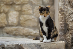 perfect blend (cherryspicks) Tags: street pet animal stone cat mediterranean outdoor depthoffield