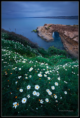 Spring flowers at the cove (Huibo Hou) Tags: ocean seascape flower la spring long exposure angle wide daisy cave jolla