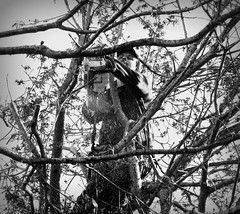IMG_9847a (Time Grabber) Tags: blackandwhite bw monochrome chainsaw treesurgeon timegrabber