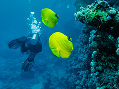 IMG_0955 (eye[4]eye) Tags: egypt diving gypten tauchen bluewaves