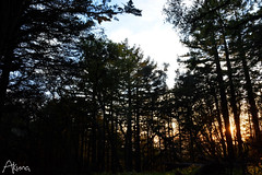 _AKU7092 (Large) (akunamatata) Tags: california sunset berkeley miller trail joaquin joachim